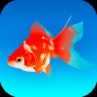 ポケット金魚